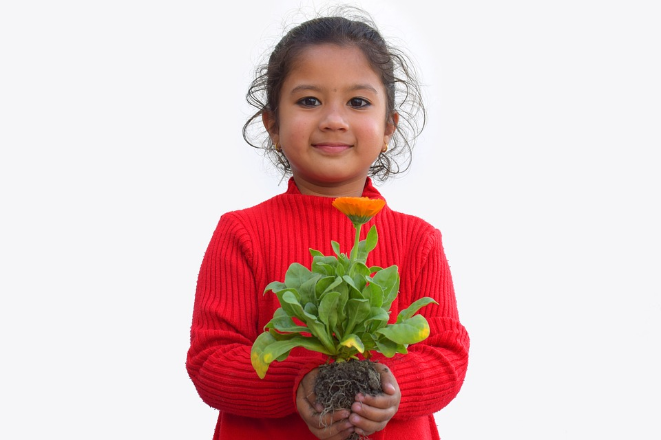 "5 ""parts of the plant"" activities for kids (no  3 is so much fun"